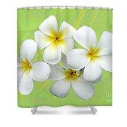 Tropical Frangrapani Shower Curtain