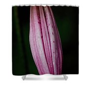 Turk's Cap Lily Shower Curtain