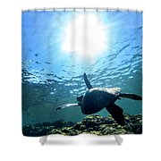Turtles View Shower Curtain