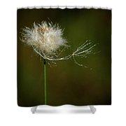 Tussock Cottongrass Shower Curtain