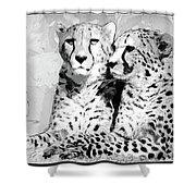 Two Cheetahs Shower Curtain
