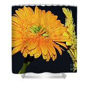 Two Gerbers Shower Curtain