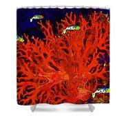 Underwater. Coral Reef. Shower Curtain