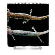 Valdina Farms Salamander Shower Curtain