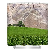 Vines Contrasting With Chiles Atacama Desert Shower Curtain