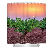 Vineyards At Pink Sunset Shower Curtain