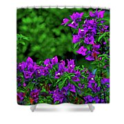 2- Visions Of Violet Shower Curtain