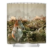 Watercolour Painting Of Beauttiful Close Up Of New Forest Pony H Shower Curtain