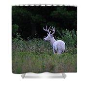White Buck Shower Curtain