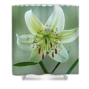 White Tiger Lily Shower Curtain