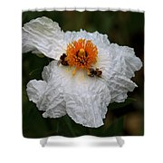 White Poppy And Bee Shower Curtain