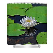 2- White Water Lily Shower Curtain