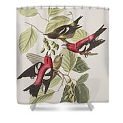 White-winged Crossbill Shower Curtain