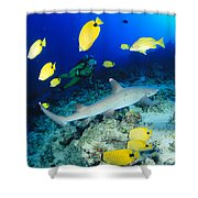 Whitetip Reef Shark Shower Curtain