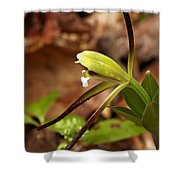 Whorled Pogonia Shower Curtain