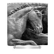 Wild Mustang Statue I V Shower Curtain
