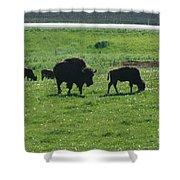 Wisconsin Buffalo Shower Curtain