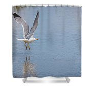 Yellow Legged Gull Take Off Shower Curtain