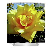 Yellow Rose Beauty Shower Curtain