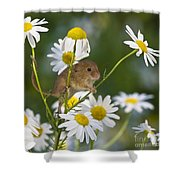 Young Eurasian Harvest Mouse Shower Curtain