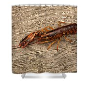Young Lobster Shower Curtain
