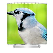 Blue Jay, Animal Portrait Shower Curtain
