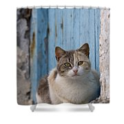Cat In A Doorway, Greece Shower Curtain