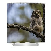 Hawk Owl Shower Curtain