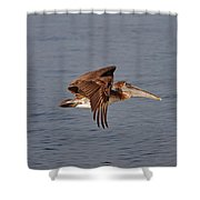 20- Pelican Shower Curtain