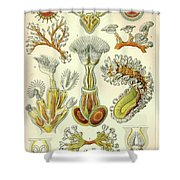 Vintage Zoological Shower Curtain