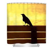 20- Waiting Shower Curtain