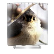 2000-001 - Tufted Titmouse Shower Curtain