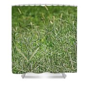 2008 Crab Grass Mead Shower Curtain