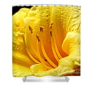 2008 Daylily Shower Curtain