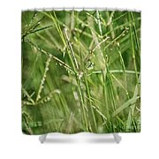 2008 Grasshopper In Green 'can You See Me...' Shower Curtain