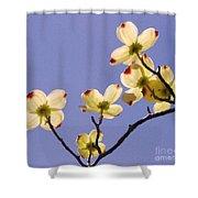 2009 Springtime  6399  Shower Curtain