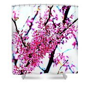 2016-03-18 Redbud Tree In Bloom Shower Curtain