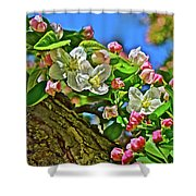 2016 Early May King Arthur Crabapple Shower Curtain