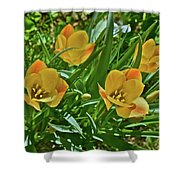 2016 Early May Meadow Garden Bright Gem Batalin Tulip Shower Curtain