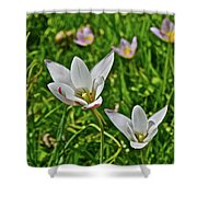 2016 Early May Meadow Garden Lady Jane Tulip Shower Curtain