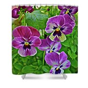 2016 Mid May Pansies 1 Shower Curtain