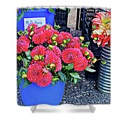 2016 Monona Farmer's Market Blue Bucket Of Dahlias Shower Curtain