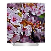 2017 Earthday Olbrich Gardens Fuji Cherry 1 Shower Curtain