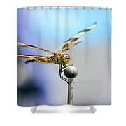 2017 Eclipse Dragonfly Shower Curtain