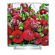 2017 Monona Farmers' Market August Dahlias 1 Shower Curtain