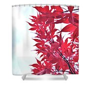 2017 Red Maple 3 Shower Curtain