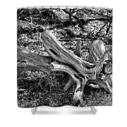 201702250-005k Cedar Stumps 2x3 Shower Curtain
