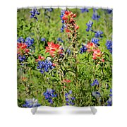 201703300-068 Indian Paintbrush Blossom 2x3 Shower Curtain