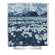 Public Domain Images Shower Curtain
