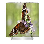 2065 - Butterfly Shower Curtain